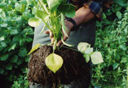 有機栽培の土の写真